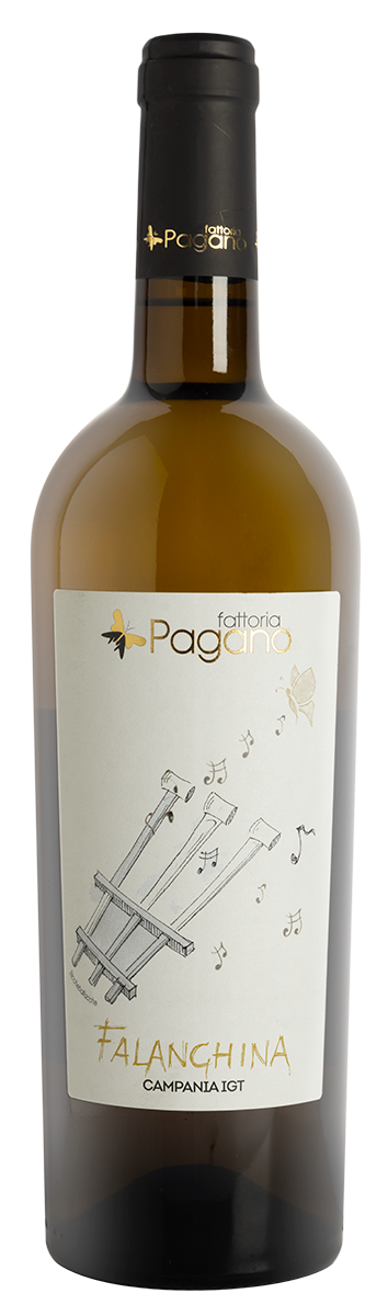 Falanghina Fattoria Pagano