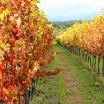 Vigna pagano in autunno