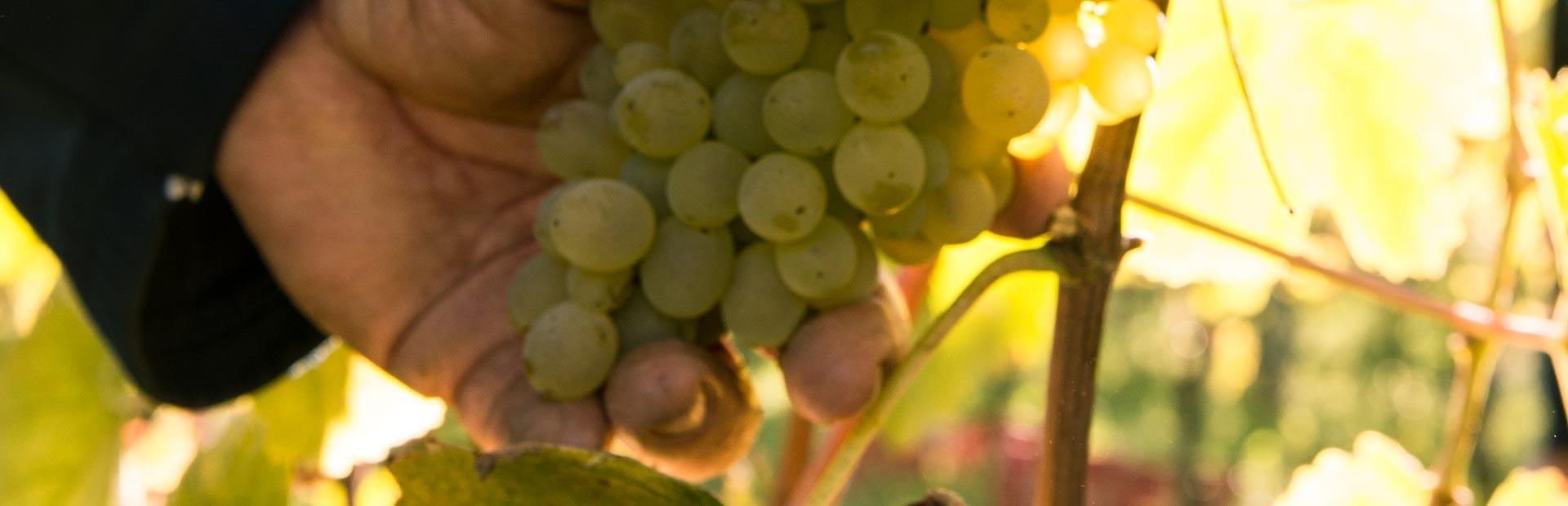 fattoria pagano schede vini_fabula